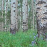 Tree-ed